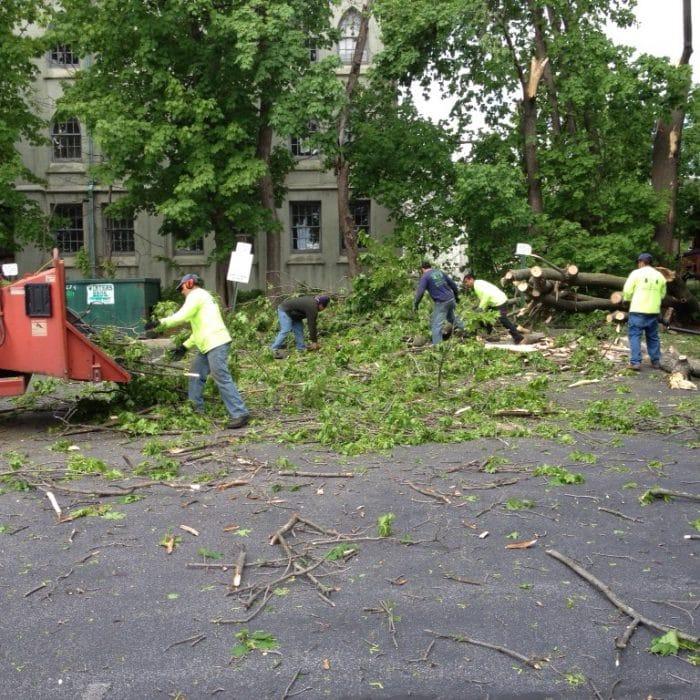suffolk county tree service ny
