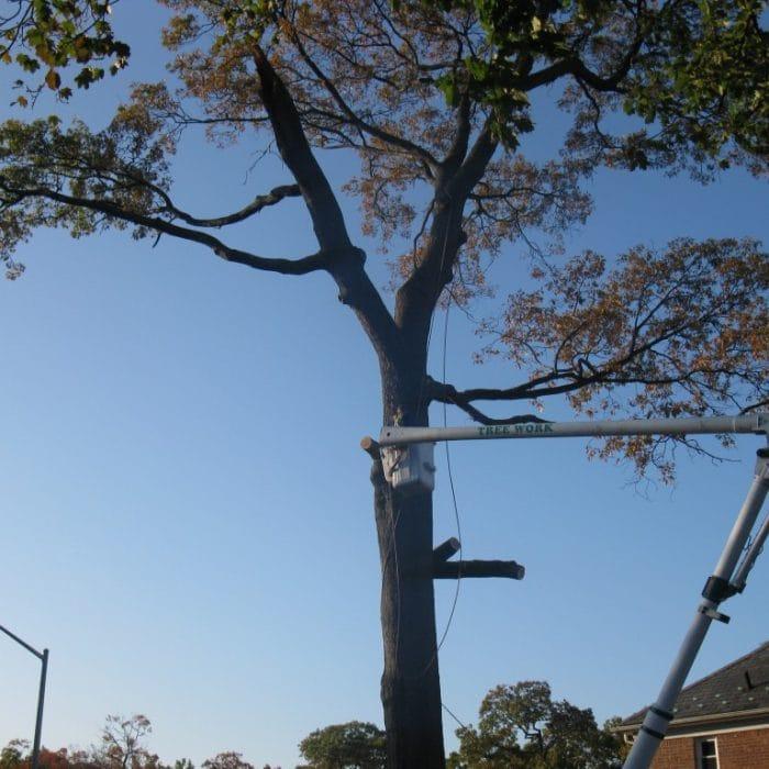 suffolk county tree pruning