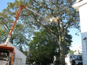 suffolk county tree removal