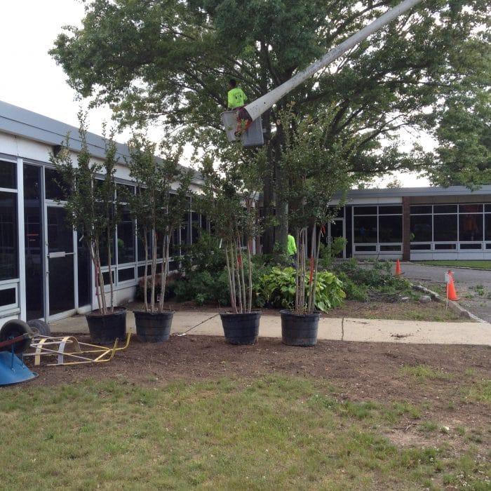 Suffolk County Tree Service company