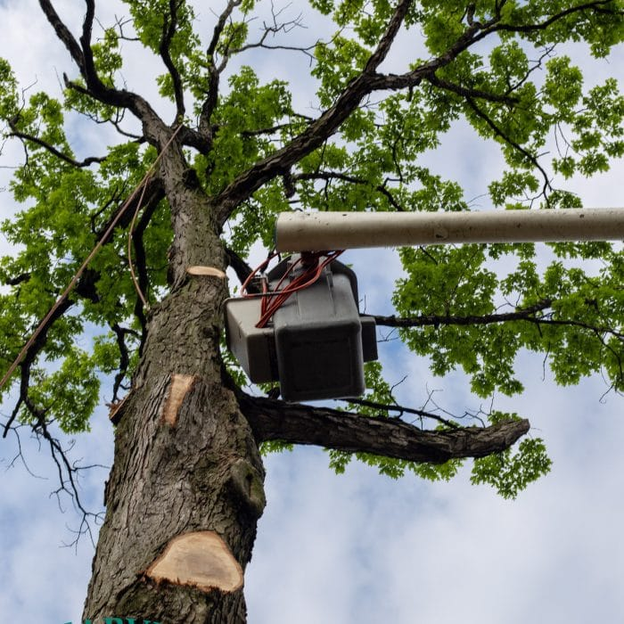 tree pruning high in the sky