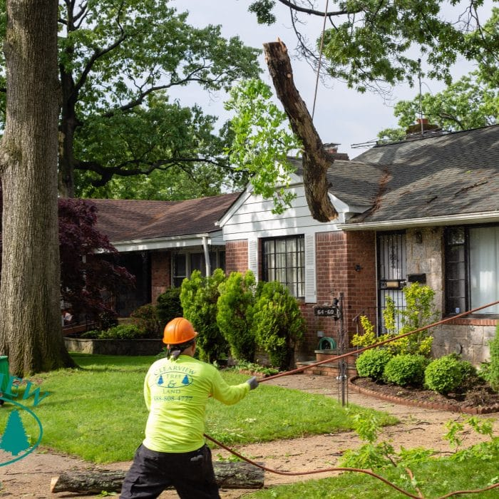 tree removal technician